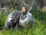 Conejo enano - (4 años)