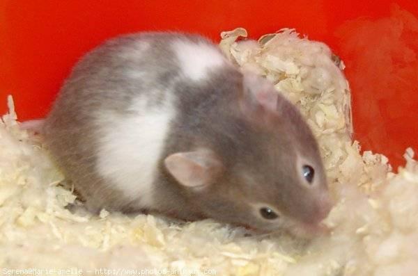 Fotos De Hamster Bonjour Je M Apel Rubi