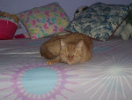 Pumpkin - (6 años)
