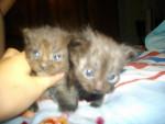 grisette et ponpon - (1 mes)
